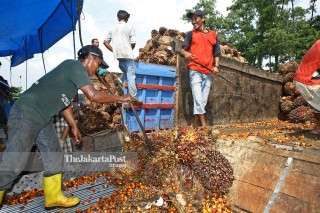 File: Sawit di Riau