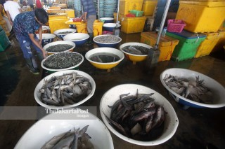 Bad Weather, Fish Supply Low