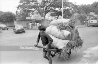 FILE : Pencari Rumput (1984)