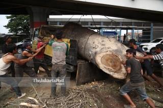 Pekerja dan batang pohon