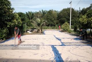 Pepper farmer activity in  Bangka Belitung