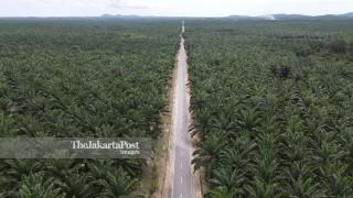 Lahan Sawit di Bangka Belitung