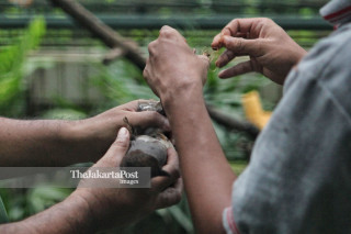 Perawatan Unggas Istana Burung TMII