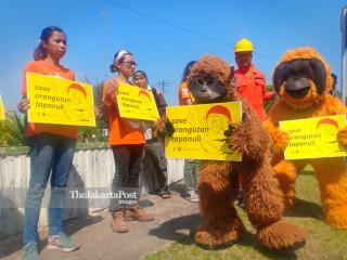 Center for Orangutan Protection protes pembangunan PLTA Batang Toru