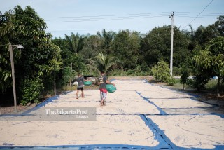 Peppers farmer activity in Bangka Belitung