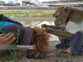 Topeng Monyet