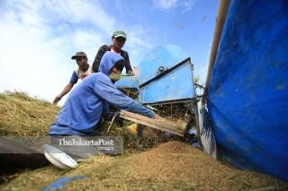 Petani merontokkan bulir padi dengan mesin di persawahan Mamasa